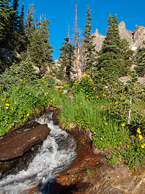 Stream, wildflowers, and peaks.