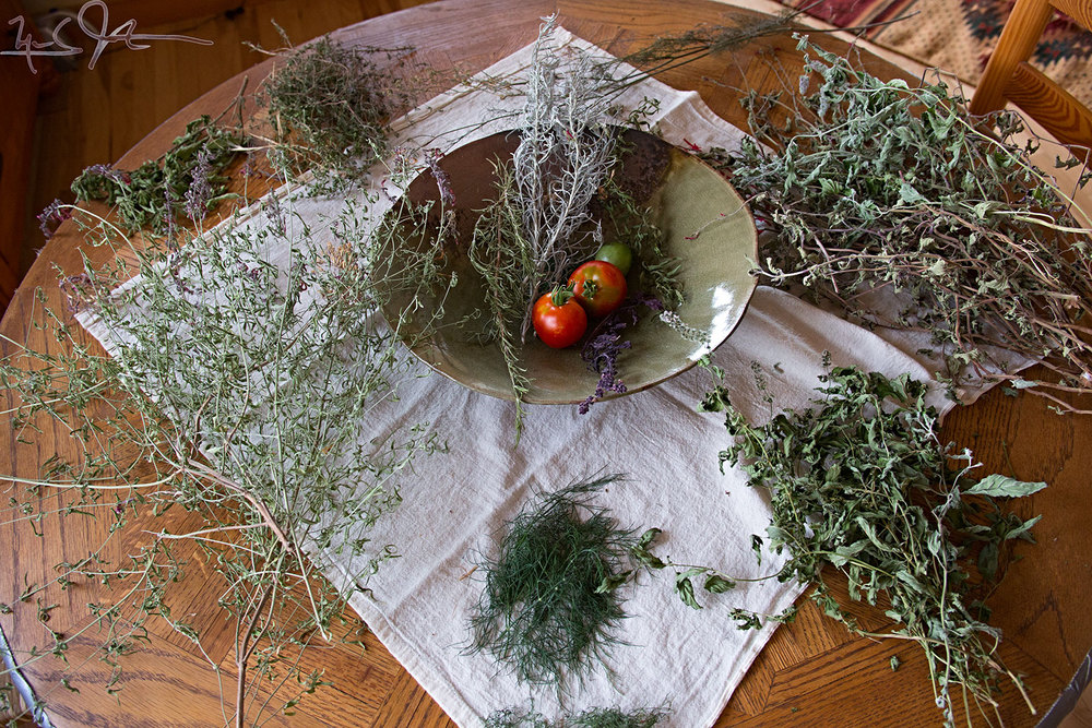 Counter-clockwise from 6 o'clock: dill, hyssop, stevia, thyme, dill on the stick, sage, and mint.  In the dish from left to right: rosemary, curry, tomatoes, and purple basil, and a second variety of hyssop.