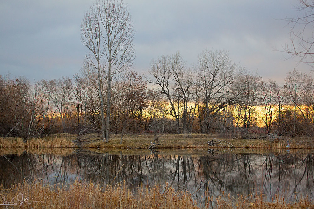 No herons in this one - just sunrise coming behind the leafless trees and the glassy surface of a pond.