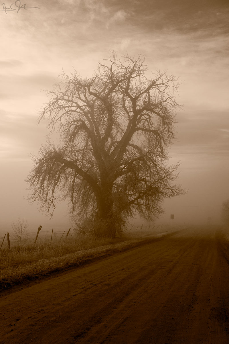 Cottonwood tree and country road.