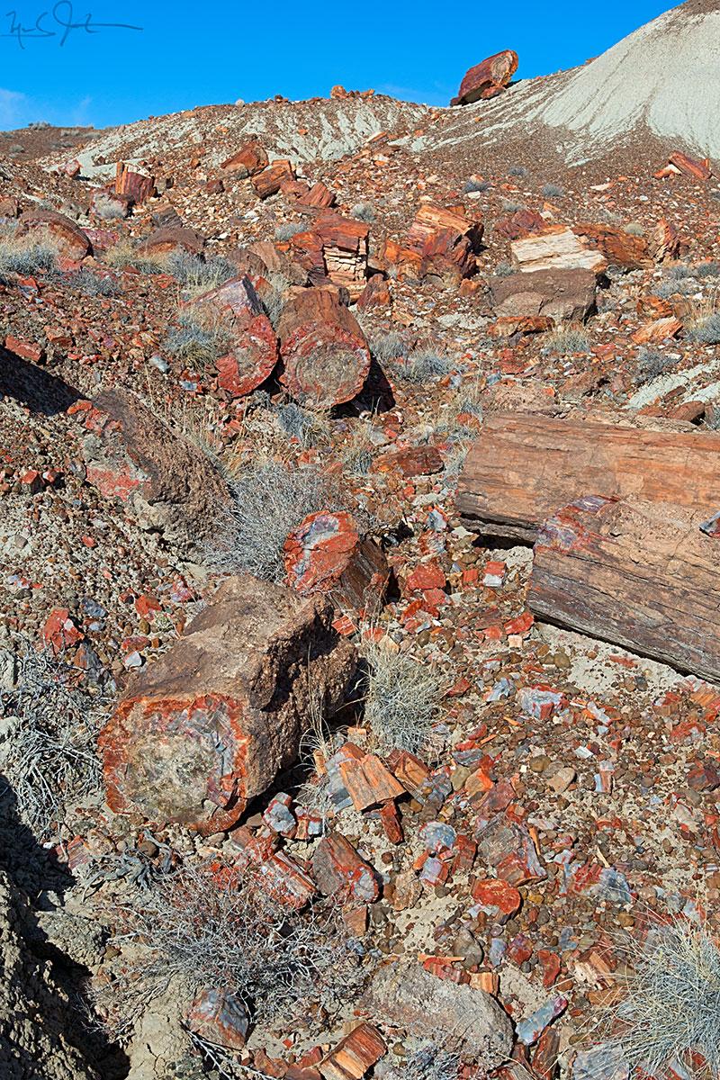 Petrified wood, Petrified Forest National Park.