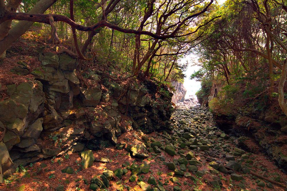 Dense woodland and rocky outlet to the sea, Jyogasaki Coast [城ヶ崎海岸], Izu Penninsula [伊豆半島], Japan.
