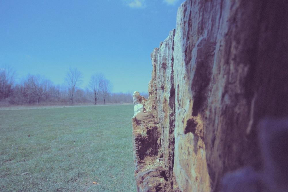 tree half.jpg