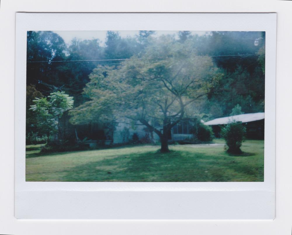 polaroid 1.jpeg