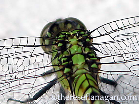 On the back of a dragonfly