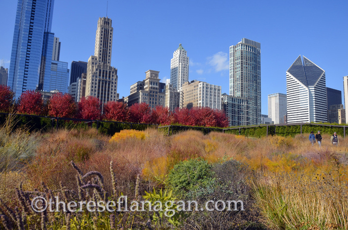Autumn in Chicago - Lurie Garden