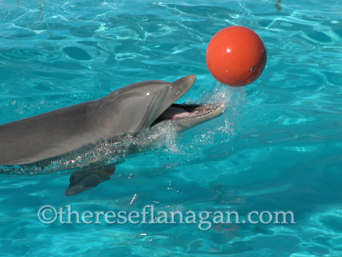 Bottlenose Dolphin with Orange Ball