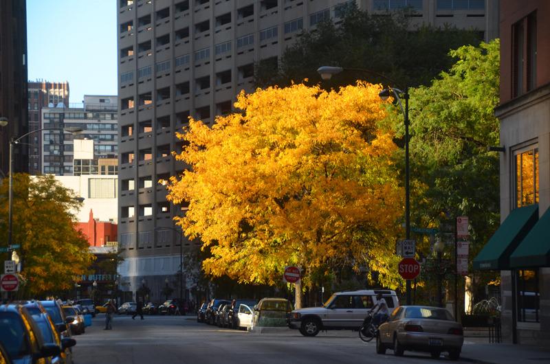 autumn in chicago 2.jpg