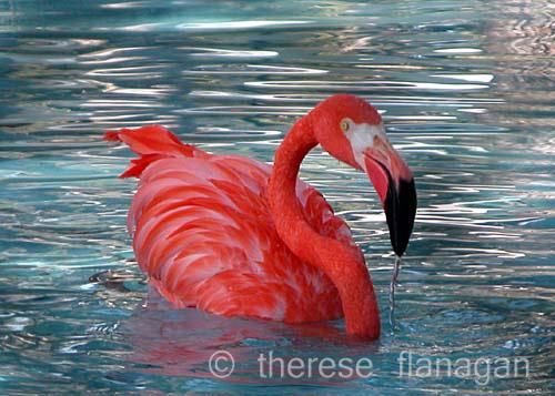 flamingo sm.jpg