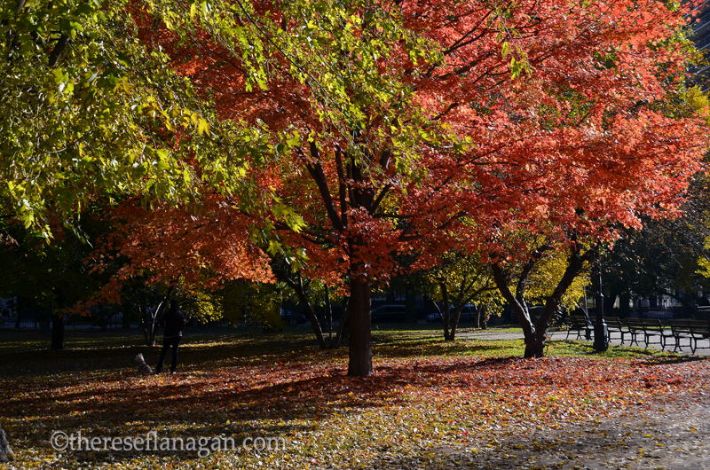 The Colors of Autumn - Chicago - 2013