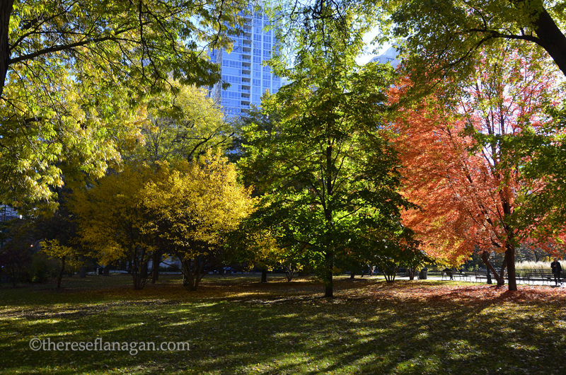Autumn Light - Chicago 2013