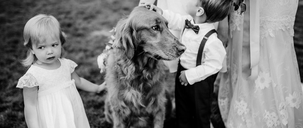 090-funny-documentary-wedding-photo-with-flower-girl-and-dog.jpg