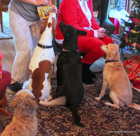 Christmas treats for dogs