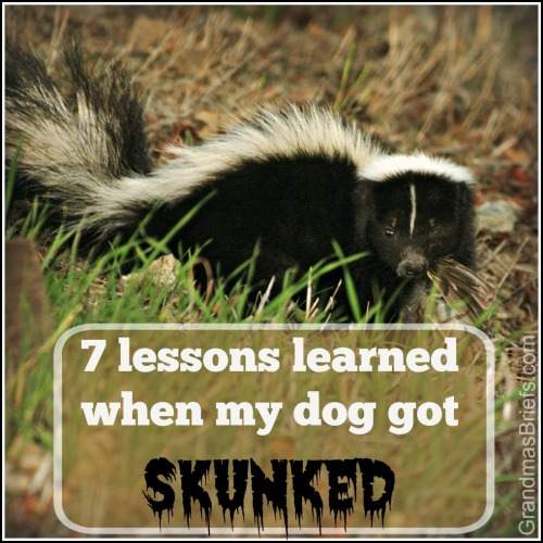 dog skunked