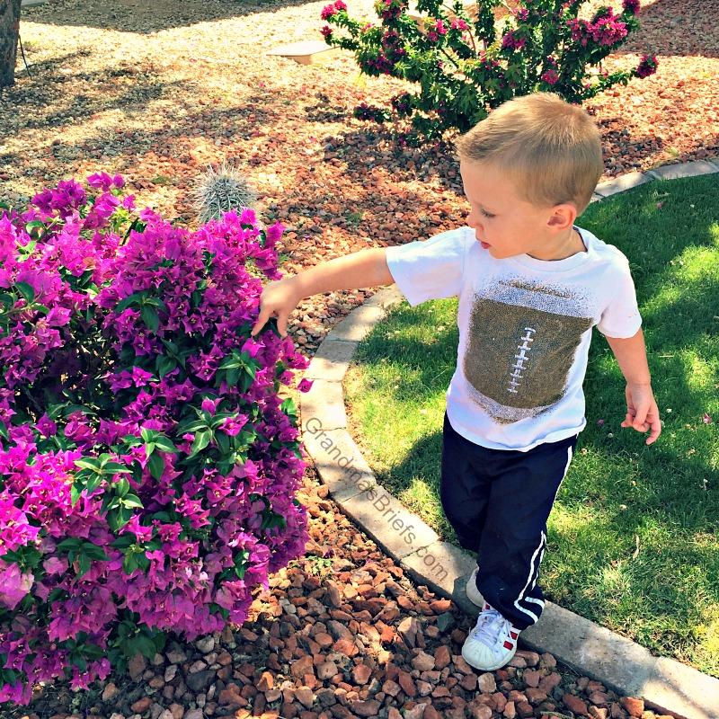 toddler and flowering bush