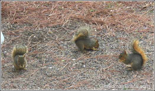 three baby squirrels