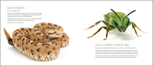 curious critters page spread
