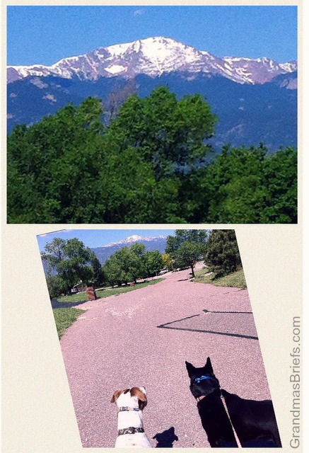 pikes peak and dogs