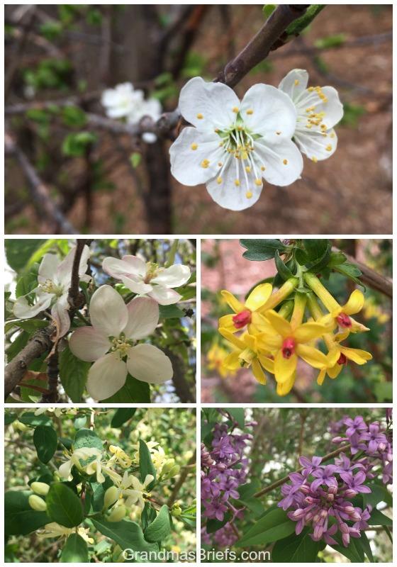 springtime buds on trees