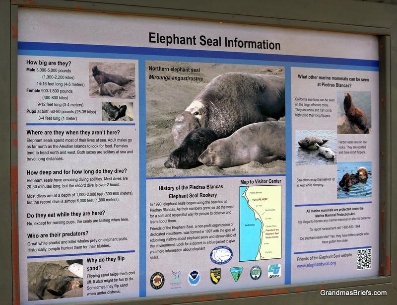 elephant seal rookery info