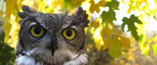 trivia owl