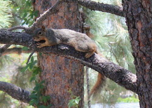 squirrel relaxing