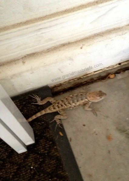 lizard in garage