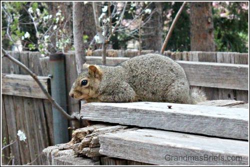 mama squirrel resting