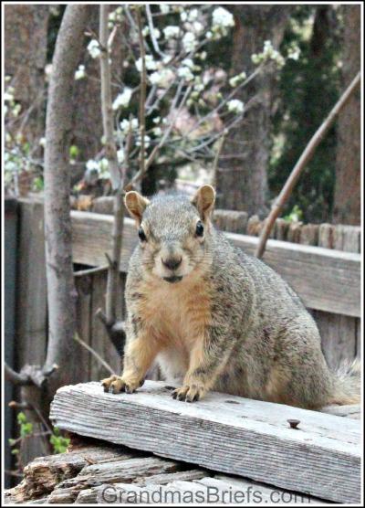 Mama squirrels