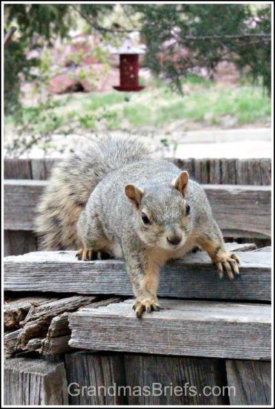 unhappy mama squirrel