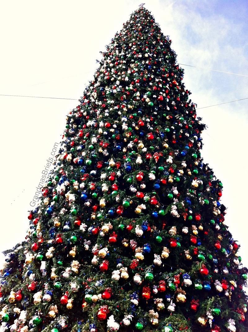 america's tallest christmas tree