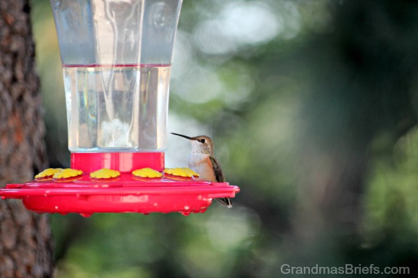 hummingbird visitor
