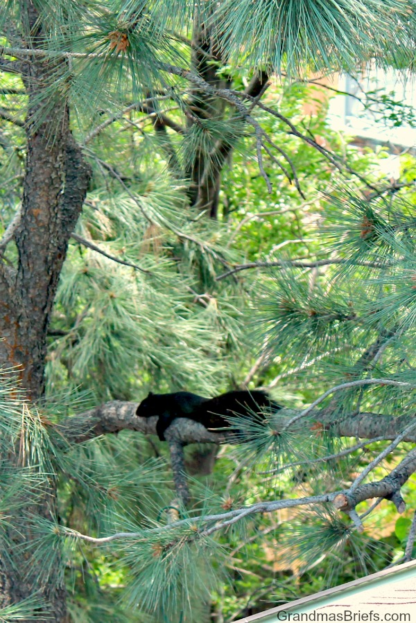hot black squirrel up a tree outside my window