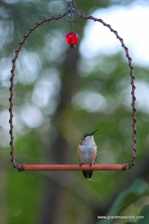 humingbird swing