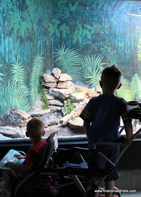 boys at aquarium