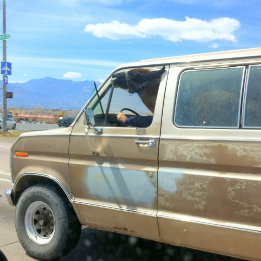 llama in van