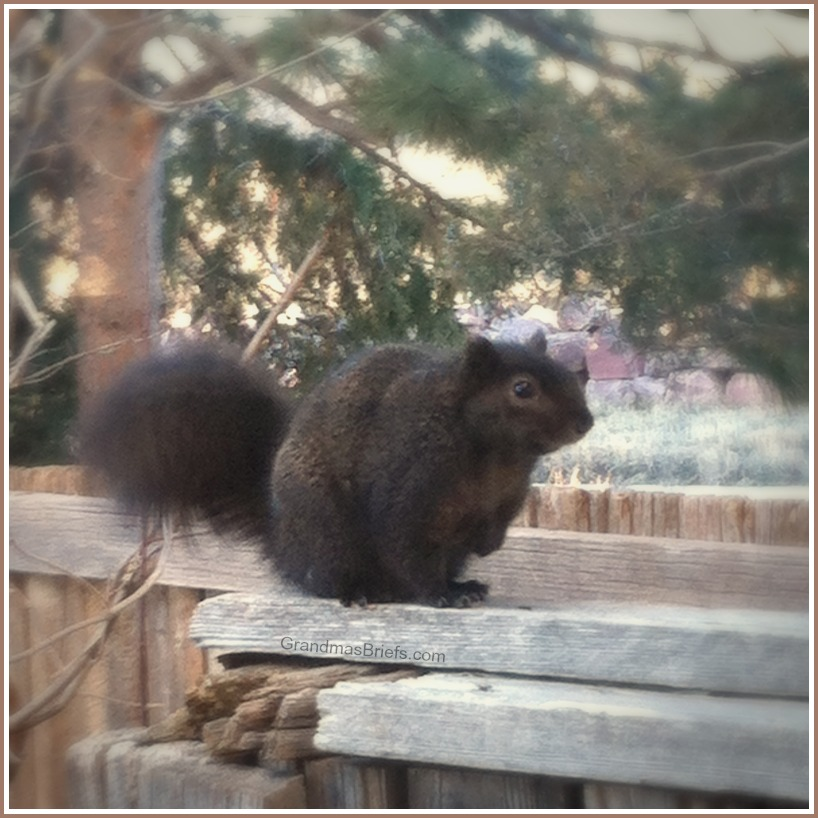 chubby mixed-race squirrel