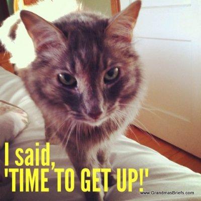 alarm cat