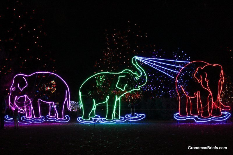 zoo+lights+16.jpg