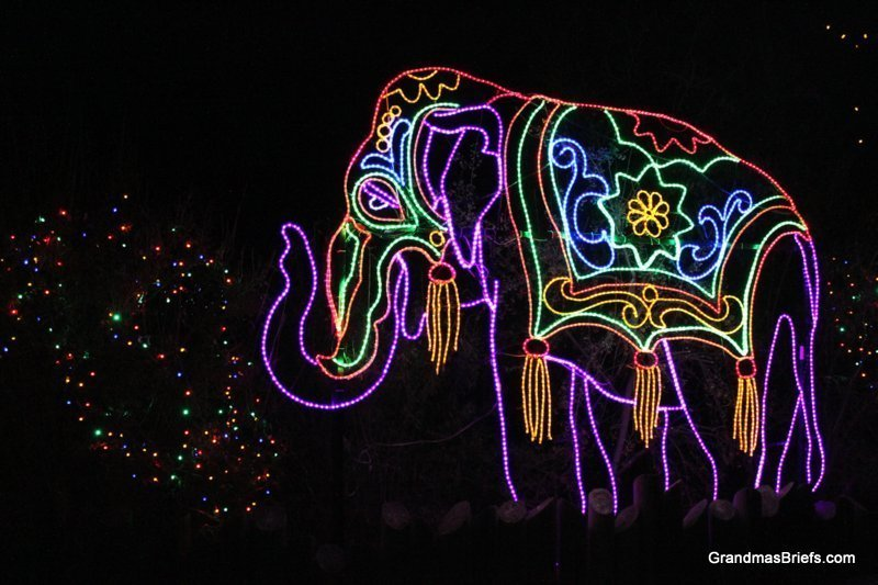 zoo+lights+17.jpg