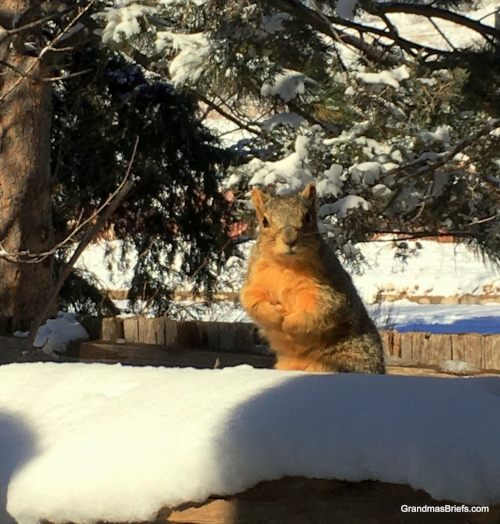 snow squirrel feb 2018.JPG