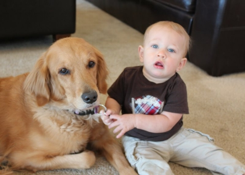 Golden retriever with baby.JPG