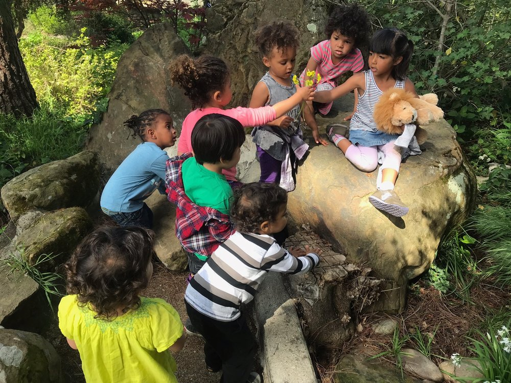 Everyone has been so excited that the Sour Grass is blooming!