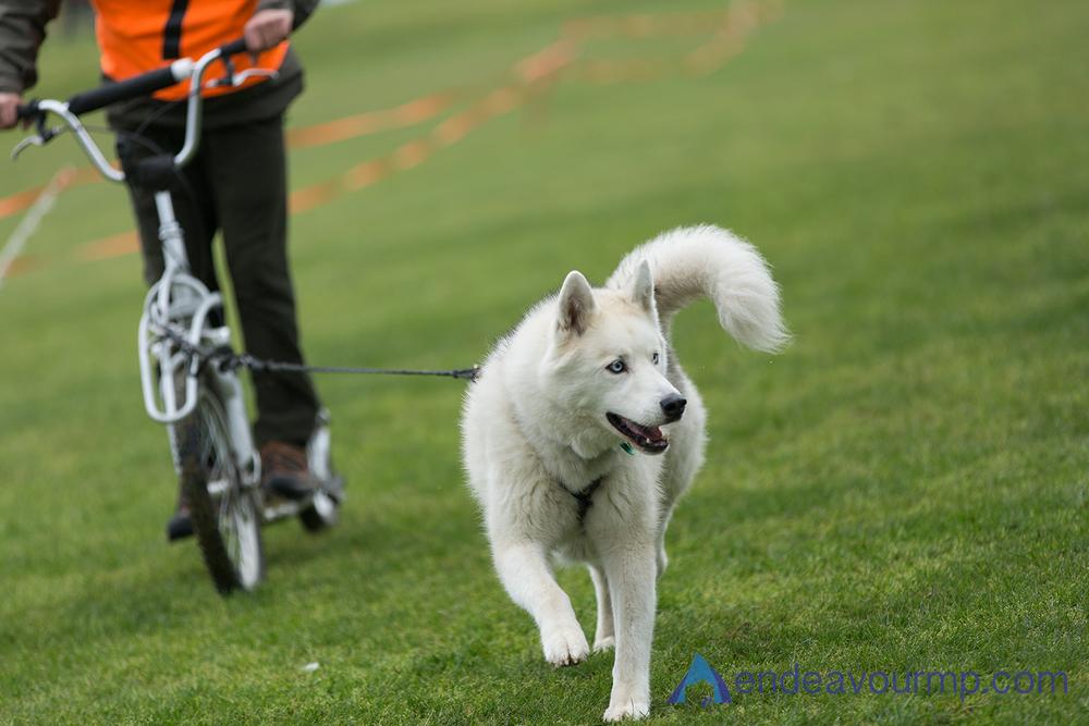 EMP_Dog_Sled01.jpg