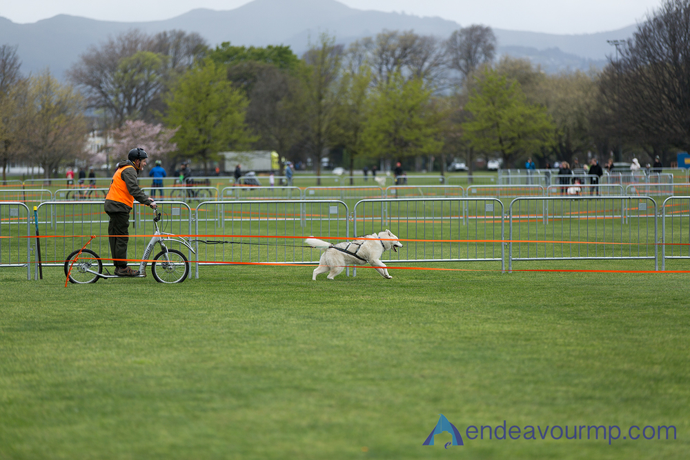 EMP_Dog_Sled02.jpg