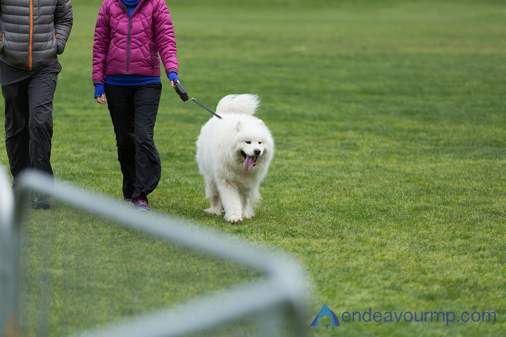 Spectator dog!! SO FLUFFY!!