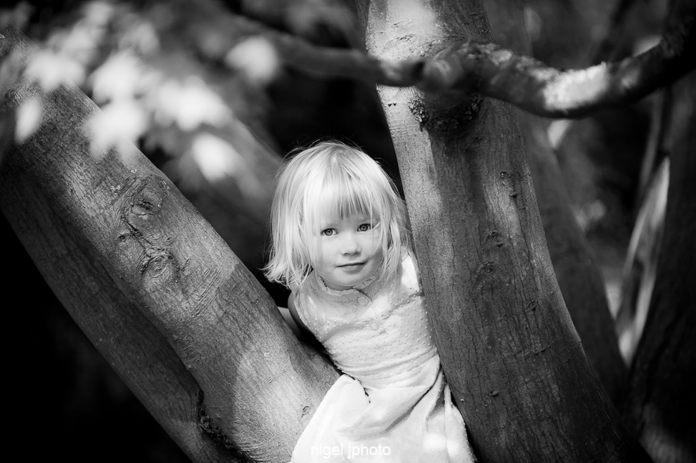 family-portrait-photography-seattle-ballard-four-year-old-girl-in-tree.jpg