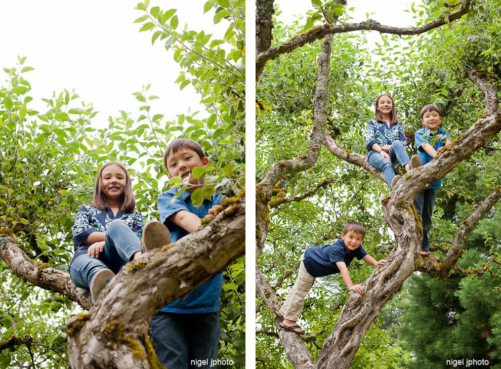 three-siblings-climbing-tree-seattle-family-photography-kirkland.jpg