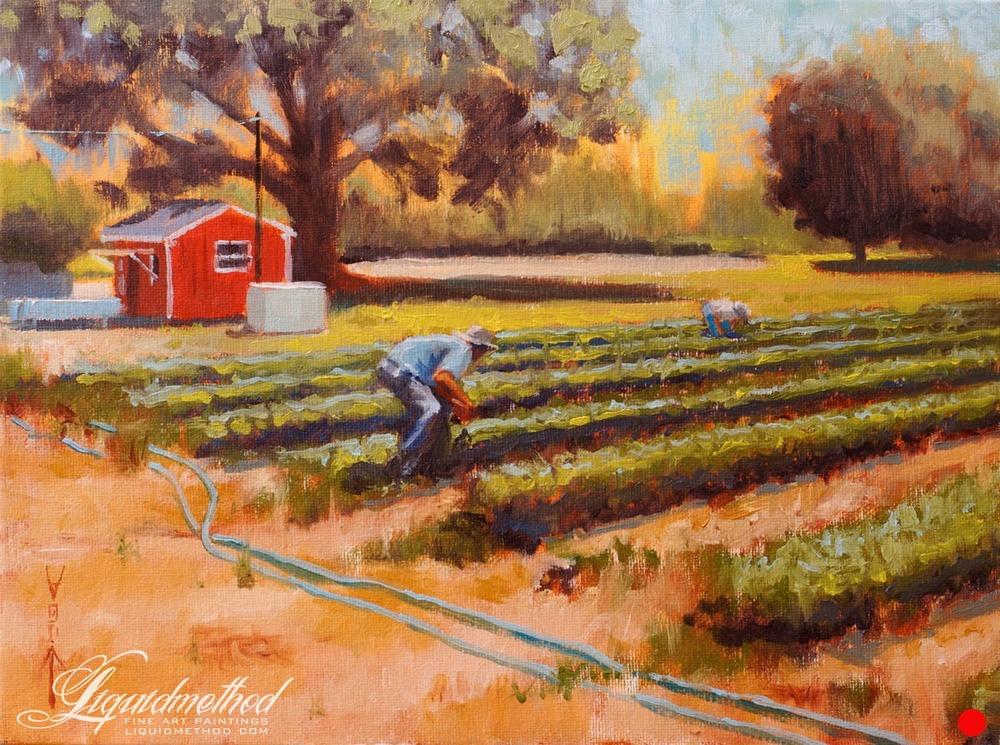 Salem Road Strawberry Farm.jpg