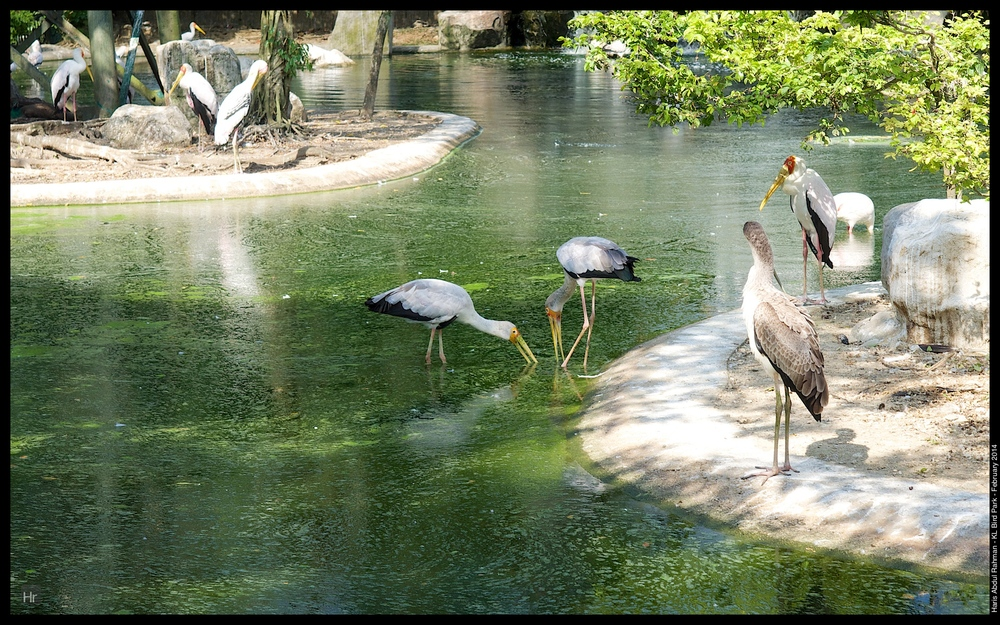 140223 KL Bird Park 18.jpg